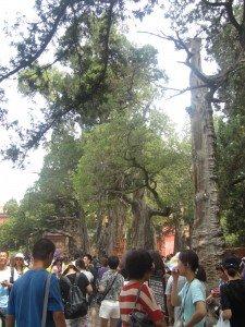 Les arbres impériaux
